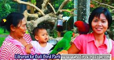 Paket Bali Bird Park + Night Safari | Bali Tour Asia http://balitourasia.com/paket-bali-bird-park-night-safari/
