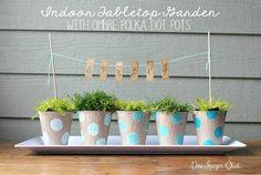 Indoor Garden with ombre polka dot painted pots