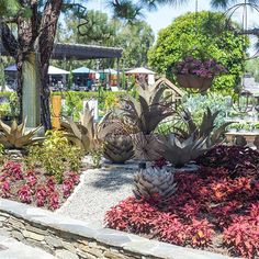 Dave Bush Island has a new summertime display with an ombr coleus landscape design and metal agave statement garden art pieces. Come see for yourself! Garden Art, Garden Design, Rogers Gardens, Come And See, Garden Accessories, Garden Styles, Garden Inspiration, Landscape Design, Summertime