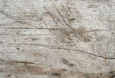 Wood texture texturepalace.com