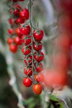 Holi, Gardening, Fruit, Creative, Hothouse, Flowers, Hacks, Plants, Red Peppers