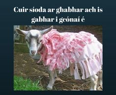Put silk on a goat and it is still a goat.