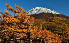 Обои гора, деревья, снег, трава, небо, осень картинки на рабочий стол, раздел природа - скачать