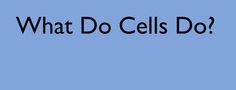 Τι κάνουν τα κύτταρα;