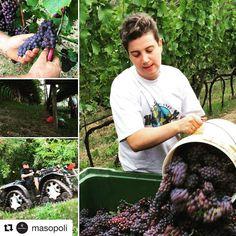 #Repost @masopoli  Forza Martina che domani finiamo di vendemmiare il #pinotgrigio  #masopoli  #trentino  #siamodonneforti
