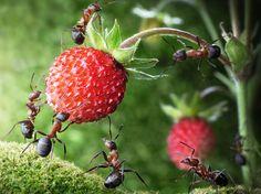 Lovely Was tun gegen Ameisen