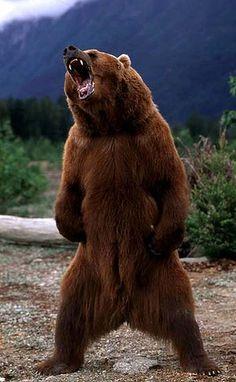art-353-bear-300x0.jpg 300×486 pixels