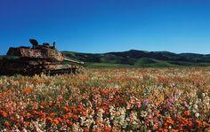tanques-devorados-naturaleza (3)