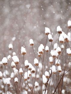 https://www.etsy.com/listing/123749367/winter-snow-on-seed-heads-9-x-12-fine
