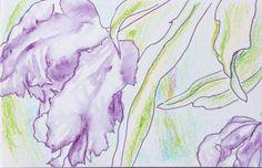 Purple Tulip by Mary Jo Major