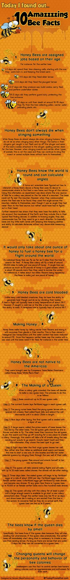 Facts About Bees.