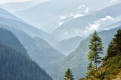 Romanian Forests Wald in Rumaenien