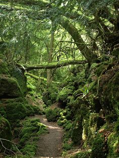 Puzzlewood in the Forest of Dean, Gloucestershire.  Said to be Tolkien's inspiration for the forests of Middle-earth, and for Rowling's Forbidden Forest.  Image from Trubble@Flickr.