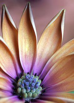 Ortaya canlı çiçek etrafı taş