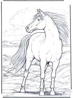 horse coloring pages | Animals coloring pages / Horses / Horse in the wind