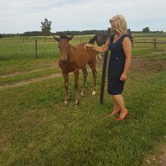 konie (2)