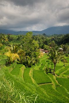Rice terraces and dramatic landscape surrounding Jatiluwih village in Penebel, where traditional Balinese irrigation known as subak is still used, located in a UNESCO World Heritage Site north of the Tabanan Regency.