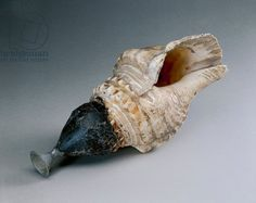 Conch shell trumpet, from Pompei