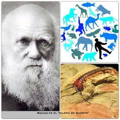 """Resuelto el """"Dilema de Darwin"""". Los culpables son unos investigadores australianos. El autor de la más famosa teoría de la evolución no pudo, sin embargo, explicar la aparición de una gran abundancia de especies hace 530 millones de años, en el periodo cámbrico. Ya puede, el Sr. Darwin descansar.... www.facebook.com/divulgades"""