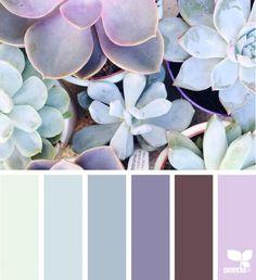 Lavender Succulent Wedding Design Seeds 67 Ideas For 2019 Color Schemes Colour Palettes, Colour Pallette, Color Combos, Wedding Wall, Color Balance, Design Seeds, Color Swatches, Color Theory, Pantone
