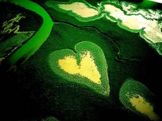Heart shapes in nature - by Photos Gallery