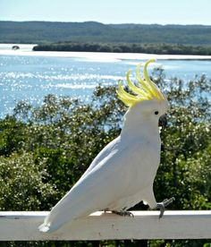 Bay of Brisbane, Queensland, Australia | Linda Fairbairn @Linda Bruinenberg Bruinenberg Bruinenberg Fairbairn