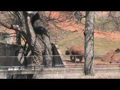 Oklahoma City Zoo Train