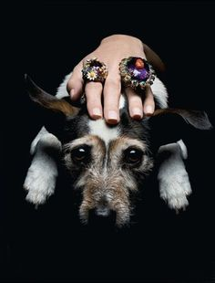 A girl's best friend, shot for Tatler Russia by Thomas Lagrange #caninecouture #dogs #fashion