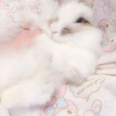 baby i got love for thee Cute Little Animals, Cute Funny Animals, Cute Cats, Cute Baby Bunnies, Cute Babies, Fluffy Animals, Baby Animals, Baby Pink Aesthetic, Fluffy Bunny