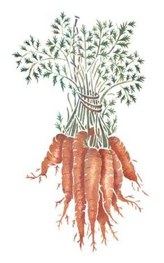 Hanging Baby Carrots Wall Stencil by DeeSigns