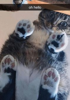 Kittens Playing, Cats And Kittens, Sweet Girl Names, Best Cat Memes, Cute Little Kittens, Lots Of Cats, All About Cats, Cat Sitting, Hilarious