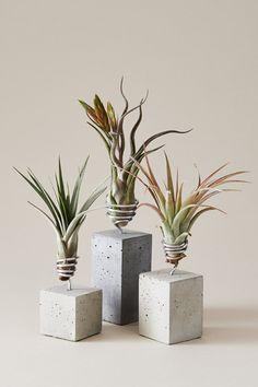 Fabulous Wanddekoration mit pflanzlichem Charakter mit Tillandsien Living Inspiration Pinterest Plants and Wall decorations