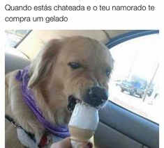 Funny Animal Memes Of The Day – 32 Pics – Lovely Animals World Lustige Tiermemes des Tages – 32 Bilder – Schöne Tierwelt Cute Animal Memes, Cute Funny Animals, Funny Animal Pictures, Cute Baby Animals, Funny Photos, Funny Dogs, Cute Dogs, Hilarious Pictures, Funniest Animals