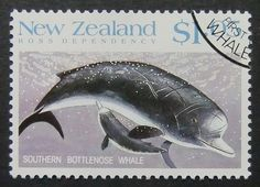 Southern Bottlenose Whale  New Zealand  by PassionGiftStampArt, $14.90