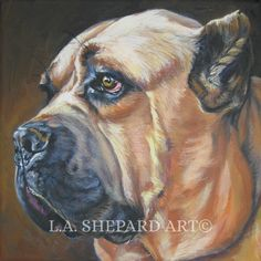 """A Cane Corso Dog art portrait print of an LA Shepard painting 12x12"""". Here's a wonderful tribute to your best friend and favorite breed- the Cane Corso! from an original painting by L.A.Shepard, whose unique, beautiful work has been collected around the world. Your print will be individually signed under the image by the artist, and initialed on the image. Copyright text is for display purposes only and will not appear on your artwork. The image is 12x12 inches and is printed on 13x19…"""