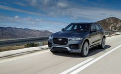 2017 Jaguar F-Pace. As per the Disco, this is a new car so would be possible only if leasing. Further, like the Q5, trunk not big enough for two dogs.