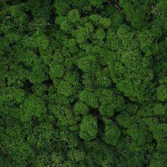 Verde Profilo MOSSdesign - Colours - MINT #verdeprofilo #mossdesign #moss #lichen #colours #mint #nuance