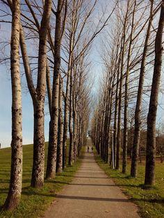 Trilha, Árvores, Natureza, Caminho, Park, Pé, Campestre