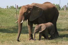 Elephants @ Indianapolis Zoo & Gardens (Indianapolis, IN) » 2007/07/06