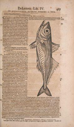 Conradi Gesneri medici Tigurini Historiae animalium liber IV : - Biodiversity Heritage Library