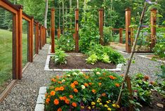 Prepare your garden with mulch, compost and lime.