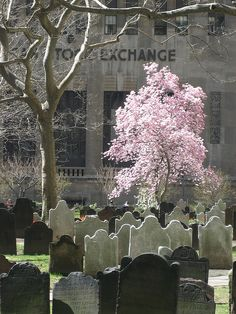 NYC. Trinity Church Cemetery  // by Timothy Hartley Smith