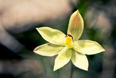 #50SaboresMexicanos Vainilla, la dulce flor aromática – Animal Gourmet