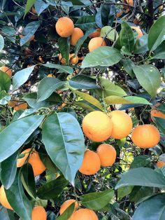 Naranjo & Naranjas