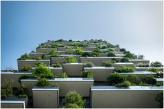 Best Sustainable Building Materials That Are Transforming Construction