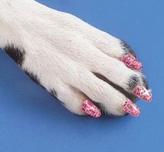 Manicured dog paw :)
