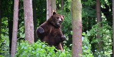 An Unexpected Bear Encounter