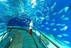 Woman in submarine tunnel, Shanghai Ocean Aquarium, China (© Robert Harding World Imagery/Alamy)