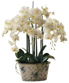 Phalaenopsis Orchid In Ceramic Pot - traditional - artificial flowers - Winward Designs
