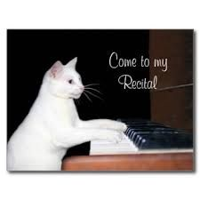 cat piano - Google Search
